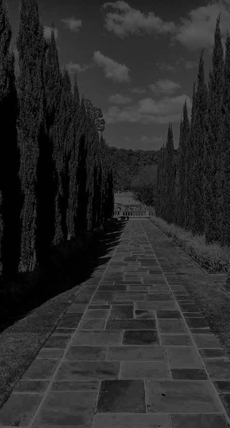 Flagstone pathway lined with trees (grayscale)